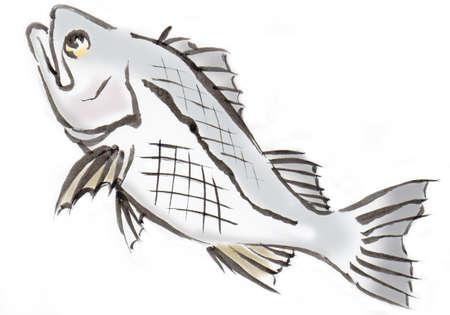 seabass illustration japanese style