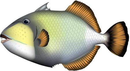 illustration Realistic of Titan triggerfish', vector EPS format.