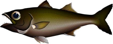 illustration Realistic of Gnomefish (Japanese bluefish, Bigeye)'. Vector EPS format.