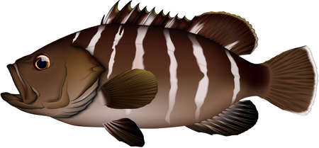 Illustration of Mahata, a saltwater fish of the family d'aha. EPS vector format.  イラスト・ベクター素材