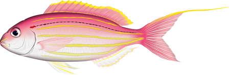 Fish Itoyolidai Illustration, Vector EPS Format  イラスト・ベクター素材
