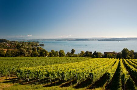 winegrowing: Lake Constance