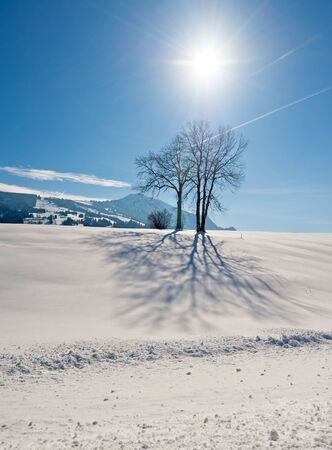 allgau: Tree in the winter in Southern Germany Stock Photo