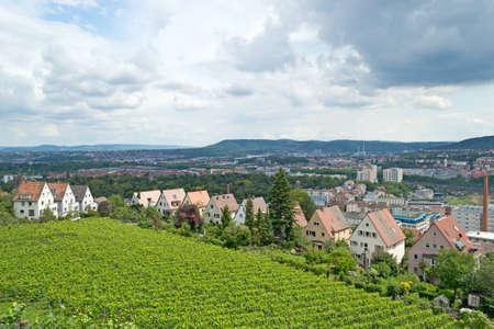 stuttgart: Vineyard in Stuttgart, Germany