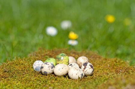 Easter eggs on moss