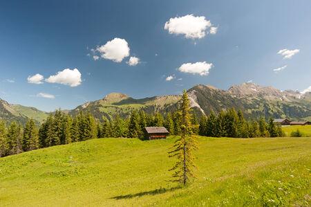 sonntag: Monta�as de Austria con el �rbol en primer plano