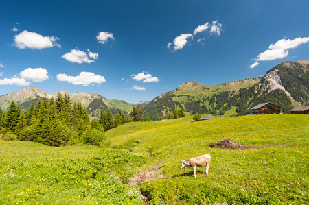 Austrian mountains with cow in the foreground photo