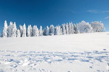 Inverno nella Foresta Nera Archivio Fotografico - 35244328