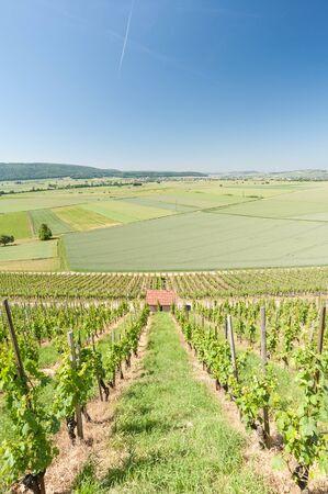 viticulture: Viticulture in Klettgau, Switzerland