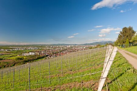 viticulture: Viticulture in Freiburg, Germany