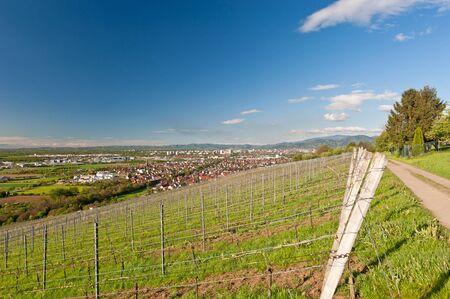 freiburg: Viticulture in Freiburg, Germany