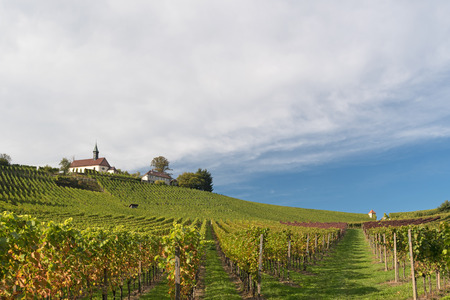 viticulture: Viticulture in Gengenbach, Germany