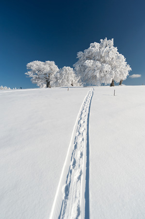 Frozen trees with track in the Black Forest Stock Photo