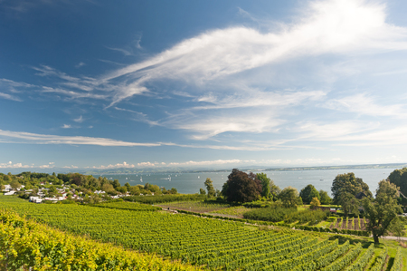 Viticulture on Lake Constance, Southern Germany