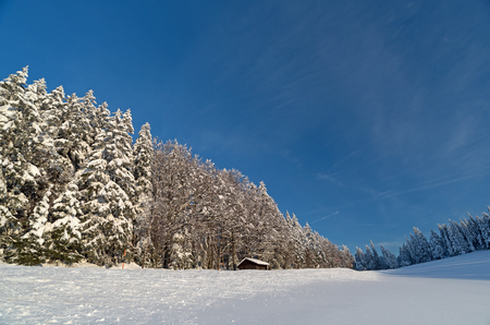 Black Forest in the winter 写真素材