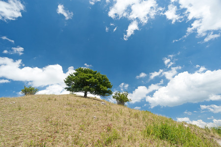 Tree on top of hill Stock Photo