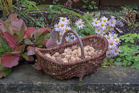 Basket full of nuts