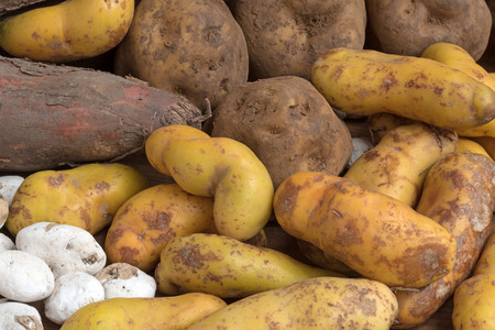 Assortment of South American potatoes 写真素材