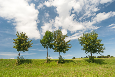 Tree row in front of blue sky