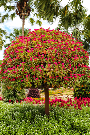 Ornamental shrub with red flowers in the garden. Stock Photo