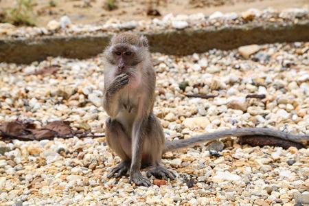 Monkey sitting on stones.