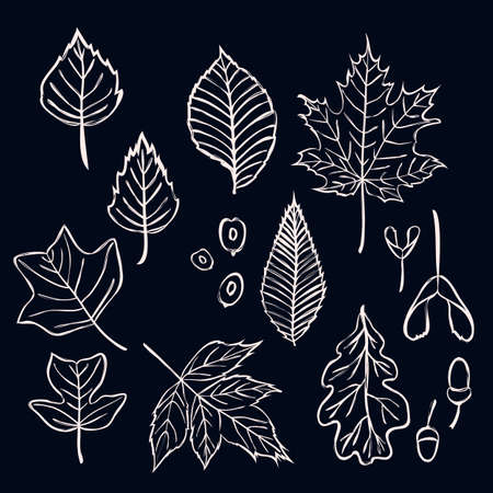 Vector set of stylizes outline tree leaves. Contour oak, maple, birch, acorn, elm, beech, tulip tree, liriodendron leaves and seeds isolated on dark for season design. Graphics. Banco de Imagens - 108438906