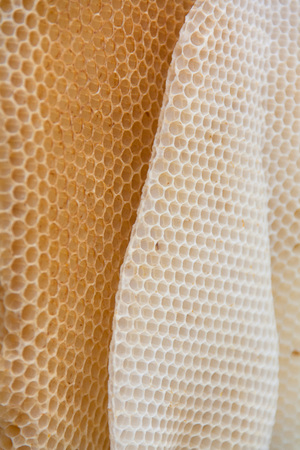 Wild bees wax honeycomb texture coseup. Form of irregular wax hexagons inside the beehive.