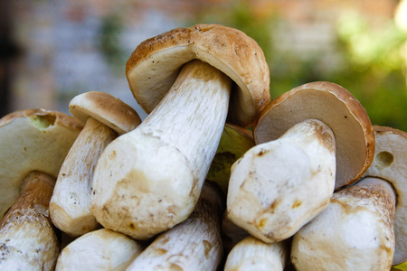 Wild forest mushrooms cut, collected and stored on the top of another Stok Fotoğraf