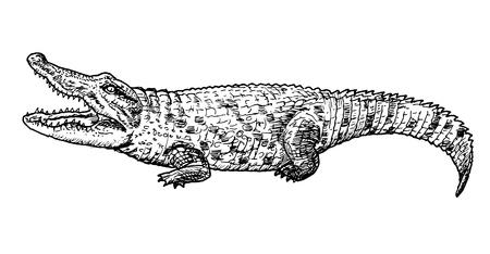 Disegno di coccodrillo - schizzo a mano di rettile, illustrazione in bianco e nero Vettoriali
