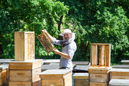 Beekeeper at work by the wooden bee hives. Young farmer in his farm.