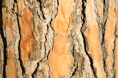 bosco: pine bark texture wood