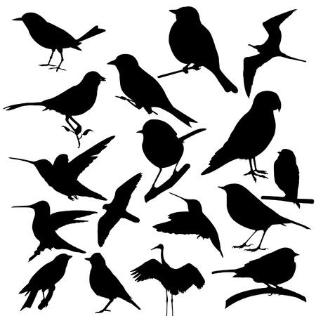 bandada pajaros: pájaro Vectores