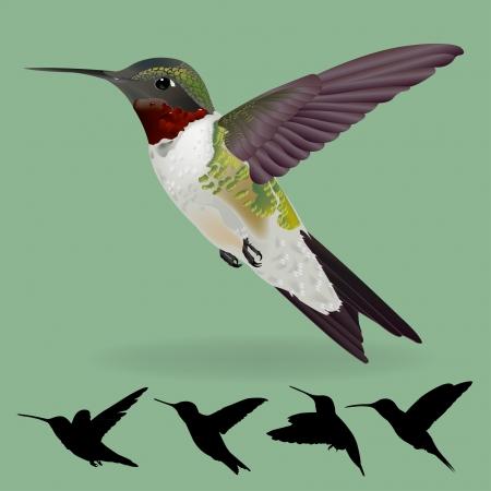 humming bird  Stock Illustratie