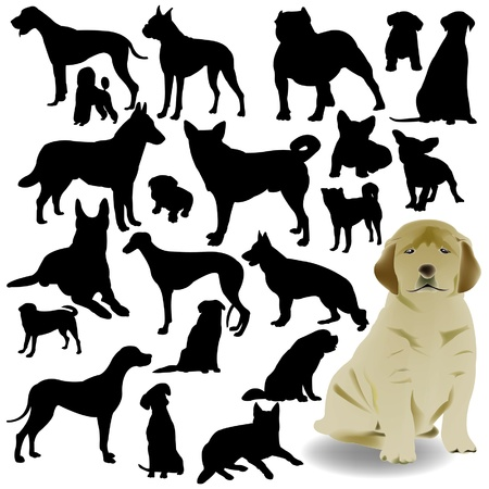 breeds: dog vector Illustration