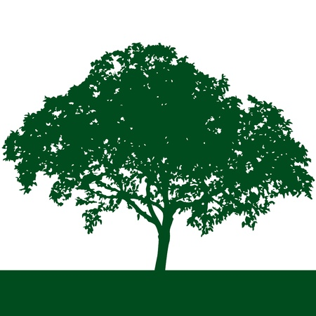 tall tree:  tree silhouette vector