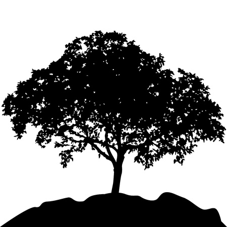 tall tree: tree at hill silhouette vector