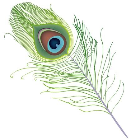pluma de pavo real: pluma de pavo real Vectores