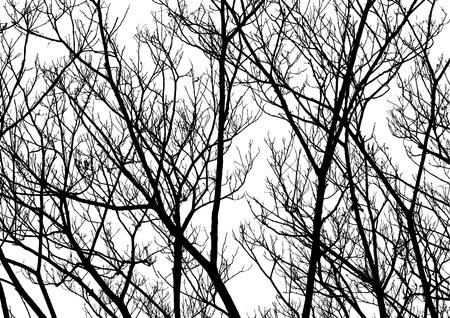 rama: Árbol ramitas silueta