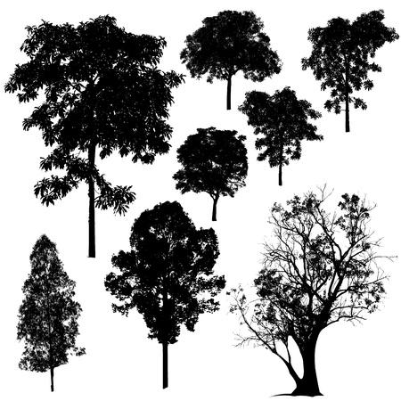 tall trees: Tree Silhouette