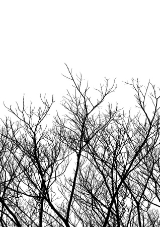 filtered: Tree Twigs