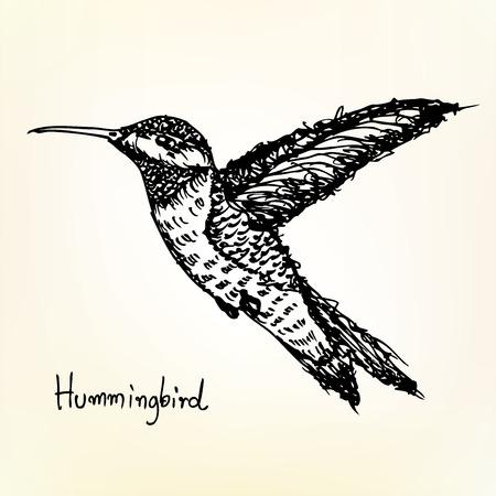 hummingbird sketch vector Vector
