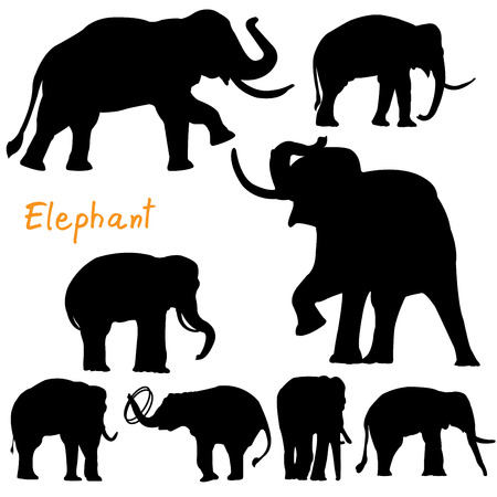 silhouette of elephant vector Vector