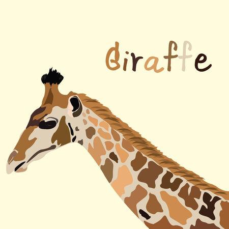 camelopardalis: giraffe head vector Illustration