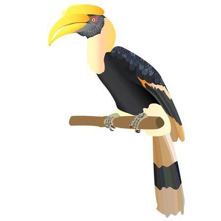 hornbill: hornbill VECTOR