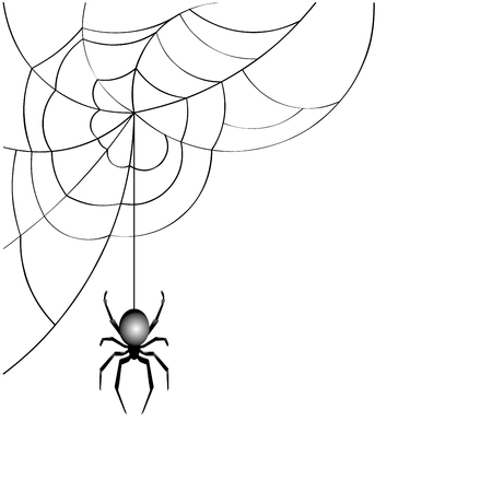 spider web: spider web  vector