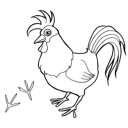 gallo: Gallo con la impresión de la pata Coloring Pages vectorial