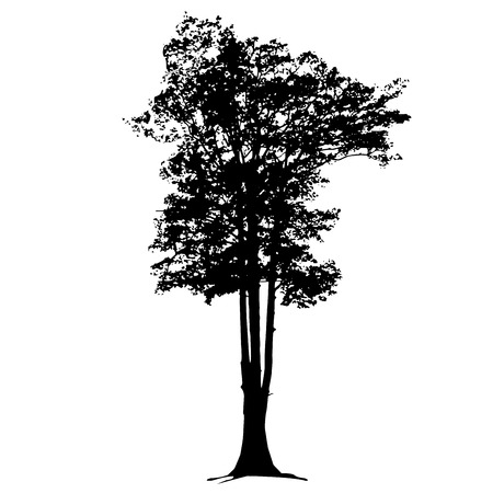 Vector big trees in silhouettes