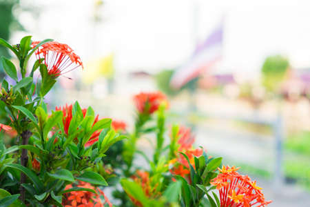 itinerary: spike flower inside the river. Stock Photo