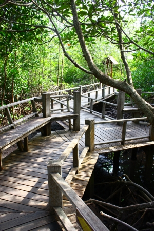 sustain: outdoor timber walkway to the mangrove forest for green design