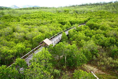 aerial view of tropical green mangrove forest landscape photo